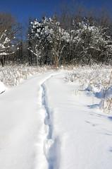 2015 After the Blizzard 11 (DrLensCap) Tags: park winter snow chicago robert nature illinois village north 15 center il after blizzard kramer 2015