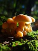 One more (Home Land & Sea) Tags: autumn newzealand mushrooms fungi nz pointshoot sonycybershot hawkesbay cycletrail puketapu homelandsea dschx100v