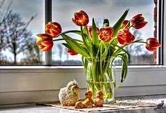 (#2.644) Tulpen  [Explore] (unicorn 81) Tags: explorephoto explore tulips bouquet window tulpen blumenstraus fenster flowers tulip hdr