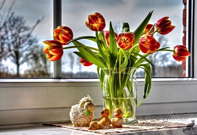 (#2.644) Tulpen  [Explore]
