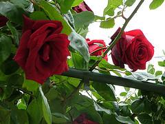 17053424576_5042908037_m (Lihy Arts) Tags: ☀ ღ ♫♫ ❤ ☀ღ♫♫❤ ♪ musicforthemind happiness bonnejournée ღϟツ ϟღツ amoureux amitié romantique romanticlove love romantic 情人节 バレンタイン การ์ดแสดงความรัก greetingcards cartesdevœux 有花 草 山 水 樹 美 讚 merci lihi tain m lyy25 יעל