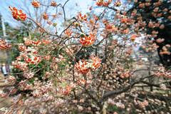 DS7_5626.jpg (d3_plus) Tags: sky plant flower nature japan walking spring scenery bokeh hiking wideangle daily bloom   wildflower  kanagawa   dailyphoto    thesedays erythronium superwideangle sagamihara    dogtoothviolet      shiroyama  a05 erythroniumjaponicum   1735mmf284 tamronspaf1735mmf284dildasphericalif tamronspaf1735mmf284dildaspherical d700   nikond700 tamronspaf1735mmf284dild tamronspaf1735mmf284  tamronspaf1735mmf284dildasphericalifmodela05 dogtoothvioletvillage