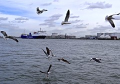 Along the Maasboulevard_07768-imp (John van Rhijn) Tags: seagulls water ship dove vlaardingen nieuwewaterweg duif schip zeemeeuwen sonydschx200v johnvanrhijn