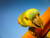 "Parrot <a style=""margin-left:10px; font-size:0.8em;"" href=""http://www.flickr.com/photos/41134504@N00/17162916879/"" target=""_blank"">@flickr</a>"
