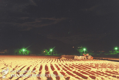 Coffee Drying at Night in NIcaragua