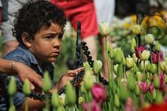 IMG_4483-02 (lavianots386) Tags: park street flowers people festival kids photography washington child play festivals tulip albany albanyny tulipfestival washingtonpark childern tulipfestival2015