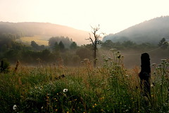 Erstes Morgenlicht (impossiblejoker) Tags: wood morning flowers light sunlight flower tree nature forest landscape natur meadow wiese morgens morgenlicht