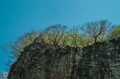 DSC03234 (Braulio Gmez) Tags: barrancadehuentitn biodiversidad caminoamascuala canyon canyonhuentitan faunayflora floresyplantas guadalajara guardianesdelabarranca huentitn ixtlahuacandelro jalisco mountainrange mxico naturaleza paisaje senderismo sierra barrancadehuentitn barranca huentitn ixtlahuacandelro mxico