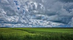 Waldviertel - Impressions (Rene'D.) Tags: 2016 waldviertel oesterreich forest wood quarter sky wide land grass meadow blue green endless cloud clouds