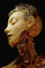 Irreverent Monkey 154 (Desperate John) Tags: head wax toymonkey imagined anatomical irreverentmonkey