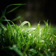 Green (Zeeyolq Photography) Tags: france green nature grass îledefrance environment paris6earrondissement