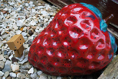 Danbo and the Giant Strawberry (Elisa Hall) Tags: danbo danboard nature garden hullcreative outdoors adventure