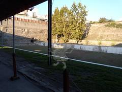 Stabia_Villa di Poppea_43