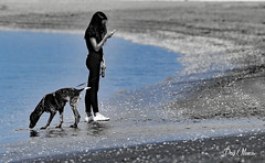 zro pokemon sur la plage - zero pokemon on the beach (png nexus) Tags: desaturation plage beach bleu blue dog chien fille girl