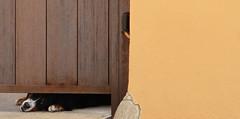 PALOL DE REVARDIT (Joan Biarns) Tags: palolderevardit pladelestany girona catalunya 203 canon7d porta puerta perro gos ca