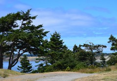 Fort Casey State Park, Washington (careth@2012) Tags: fortcaseystatepark washington scenery scene scenic view landscape forest sky clouds