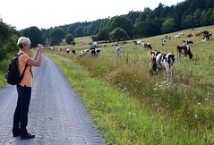 (:Linda:) Tags: germany thuringia village cow pasture poppenwind woman gaby path