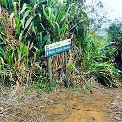 Sentier des trophes mondiaux...Stef974 (SLeperlier) Tags: stef974 sentiers 974 97414 entredeux