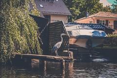 DSCF2661 (peterulrich.net | Berlin Webdesigner) Tags: spree brandenburg kajak kayak kajaktour kayaktour kajaktrip kayaktrip gumotex gumotexswing2 kanu schlauchkajak peterulrichnet 2016 august schlauch fluss river