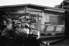 Evening light (ADMurr) Tags: la silver lake house porch shadow leica m4 kodak ferns palm