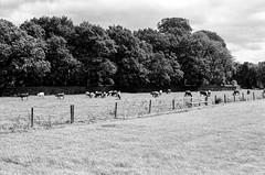 Farm, Dunham Massey (MCorrigan1983) Tags: jch400 streetpan 2016 bw dunhammassey jchstreepan400 nikkor50mmf14ais nikonfe2