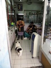 Bangkok dog listening intently to sax player - Thailand (ashabot) Tags: bangkok thailand animals critters citylife dogs dog streetscenes people peopleoftheworld peopleanddogs