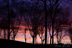 Last colors of the day (MartaQuM) Tags: blue trees sunset color azul atardecer purple rbol morado