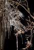 Old Man Winter's Breath (jgabby7) Tags: nightphotography winter cold ice night flashphotography icesickles icedtreebranch