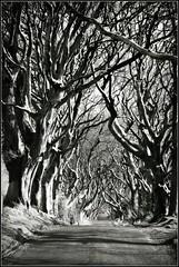 Tree Tunnel (Cul 9) Tags: