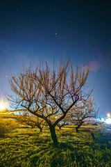 PhoTones Works #6503 (TAKUMA KIMURA) Tags: sky night spring natural scenic plum views   starry  okayama kimura       takuma    a7s photones