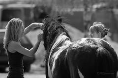 to be a horse... (dziurek) Tags: street horse woman animal photo blackwhite women wash blonde