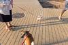 #6 Dogs (unoforever) Tags: street people españa color colour dogs spain gente candid streetphotography cs streetphoto castellon castellón fotografíadecalle spcolor