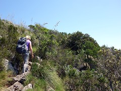 """Walking through brushland • <a style=""""font-size:0.8em;"""" href=""""http://www.flickr.com/photos/41849531@N04/17527937465/"""" target=""""_blank"""">View on Flickr</a>"""