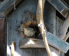Mother Wren (jmaxtours) Tags: ontario mother birdhouse wren terranova terranovaontario motherwren