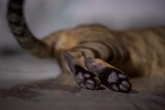 DSC05773 - Version 2 (C*A(t)) Tags: cat straycat taiwan taipei taipets sony a7s