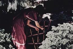 Secret Garden (Violette Nell [A Dream Within a Dream]) Tags: violettenell nature landscape jardin secretgarden summer summertime analog portrait youth dreamy ethereal vintage filmphotography portraitargentique 35mmcolorfilm paysage plants girl france travel poetry escape nostalgia melancholy flickrexplore t places flickrexplored mood feelings atmosphre