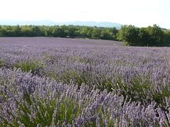 Saint Privat de Champclos Gard (cevenole30) Tags: