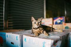 () Tags: leica m9 voigtlander nokton classic 35mm f14 hongkong hk cats rangefinder rf vsco
