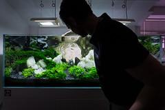 Final photo day (viktorlantos) Tags: aquascaping aquascape aquarium aquariumplants aquascapingshopbudapest ada plantedaquarium plantedtank plantedaquariumgallery greenaquagallery greenaquahungary nvnyesakvrium aquariumphotography underwaterlandscape underwaterworld crystal whitecrystal