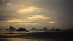 After the Rain (San Francisco Gal) Tags: coquillepoint bandon stacks pacificocean lowtide ocean water beach shore cloud bird reflection oregon sky