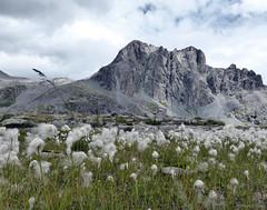Cornone di Blumone (scardeoni_fabrizio) Tags: blumone adamello montagne vallecamonica brescia