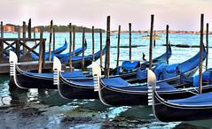 gondola parking only - venice, italy (christinathomas@att.net) Tags: blue venice italy fish color water boats island canal colorful grand palace gondola piazza grandcanal gondolas sanmarco sangiorgio