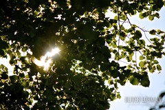 Discovering RAW photographing (oliver_max_axel) Tags: sunlight burst leaf