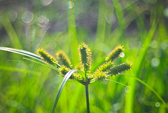 In the middle of grassland (elly.sugab) Tags: grass weed savana green flower bokeh rumput depthoffield