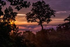 Sunset Glow: Western North Carolina Mountains (Louise Lindsay) Tags: 72516 72616 72816 icm wnc flowers inversion mountains sunset