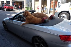 The Secret Lives of Wealthy Dogs! (donwest48) Tags: kingstreet charleston charlestonsc