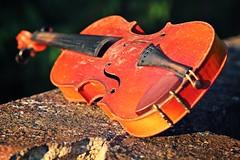 IMG_9801b - 11.09.2015 (hippo1107) Tags: violine geige musik instrument stillleben zahnderzeit antik alt canoneos650d canon eos 650d september 2015