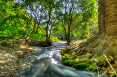 Passing by the roots (NikosPesma) Tags: greece thessaly pinios tempi river stream water tree roots green blue nature plants hdr landscape outdoor                       travelling