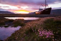 Stranded Sunset (Explore #13) (Fabian F_) Tags: iceland island ship wreck patreksfjrur sunset flowers water longexposure
