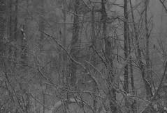 "IMG_20160914_233918 (""Jimmer"" ( http://jim-vance.pixels.com )) Tags: winter wintery snow"